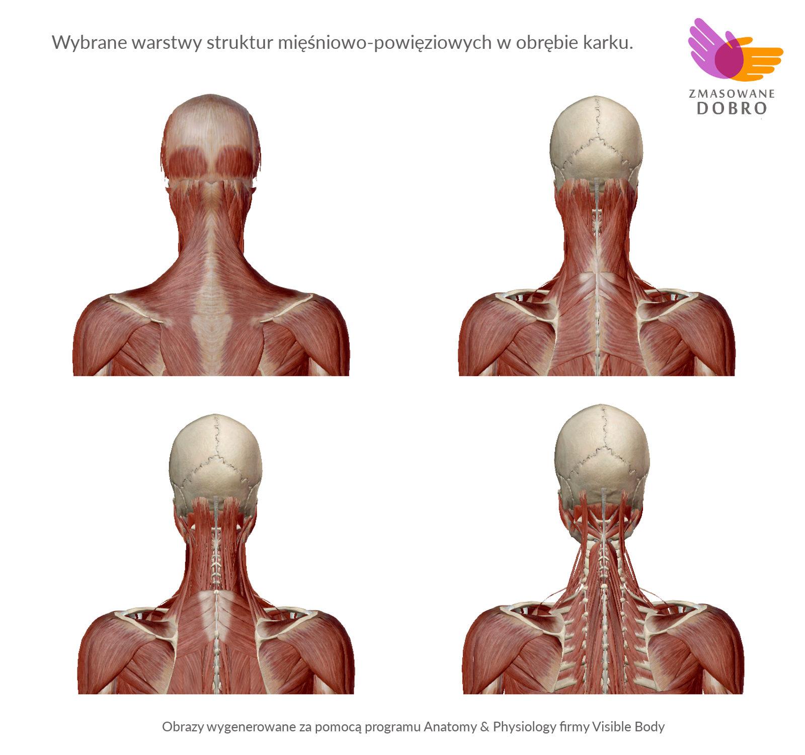 Gabinet masażu Gdańsk Oliwa, Profesjonalny masaż terapeutyczny i sportowy, masaż Gdańsk Oliwa, terapia, autoterapia, automasaż, ból karku
